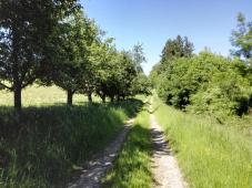 Schöner Weg mit Obstbäumen oberhalb des Sägewerks