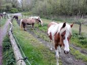 Hübsche Pferdchen am Ausgang des Vogelsangbachtals