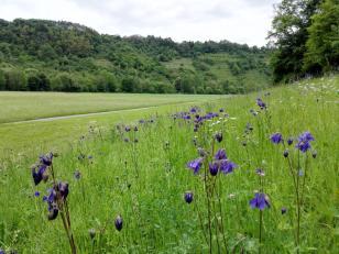 Noch mehr blaue Blumen