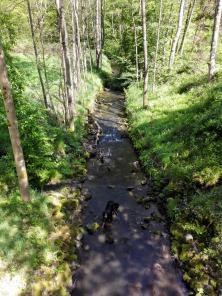 Doxi testet die Wasserqualität des Wahnbachs
