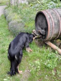 Hier kommt glücklicherweise kein Wein, sondern Wasser heraus