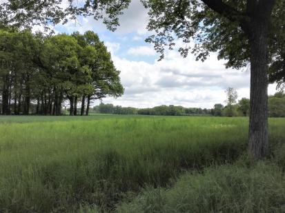 Wald und Felder zwischen Ratingen-Lintorf und Hösel
