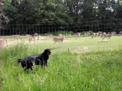 Doxi am Wildgehege beim Jägerhof Ungerer