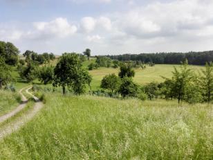 Obstbaumwiesen bei Frohnfalls