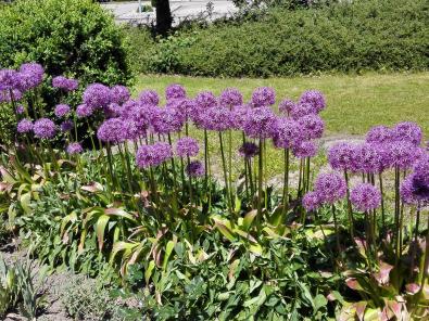 Schöne Blumen am Ortseingang von Waldenburg