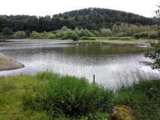An der Vorsperre leben viele Wasservögel