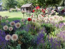 Blumen am Kurpark