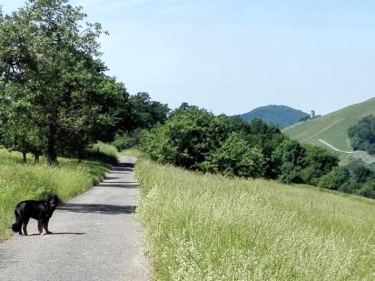 Am Horizont taucht die Burg Hohenbeilstein auf