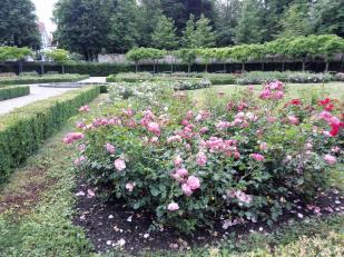 Rosengarten neben dem Schlosspark