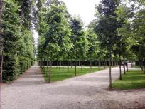 Strenge Geometrien prägen der Französischen Garten