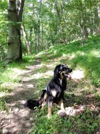 Doxi im Wald zwischen Schreckenbergturm und der Burgruine Schartenberg