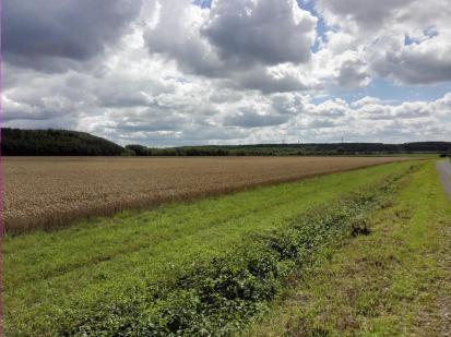 Ackerflächen auf dem Marienfeld