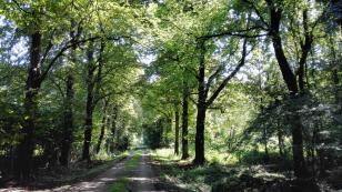 Schöne Alle im Wald