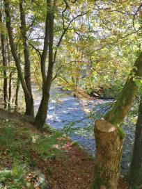 Die Rur an der Mündung des Belgenbaches