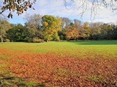 Herbstlich bunt die Bäume im Schlosspark