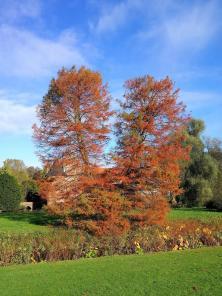 Zahlreiche exotische Bäume prägen das Gesicht des Schlossparks