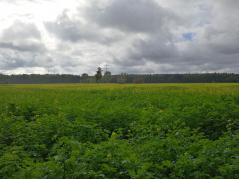Feldflächen westlich von Hilden