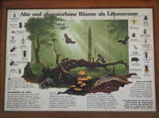 Infotafel am Lieserpfad