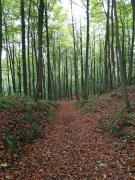 Abstieg durch Buchenwald in das Urfttal