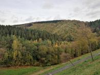 Wald hinter der Staumauer