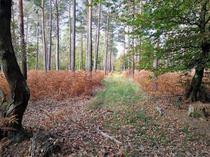 Die Farne im Wald sind bereits verblüht