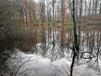 Im Naturschutzgebiet Dellwiger Bachtal