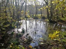 Feuchtgebiet auf deutscher Seite im Naturpark Maas-Schwalm-Nette