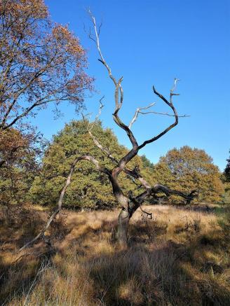 Wie ein Kunstwerk - ein abgestorbener Baum