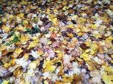 Die Textur des Herbstes