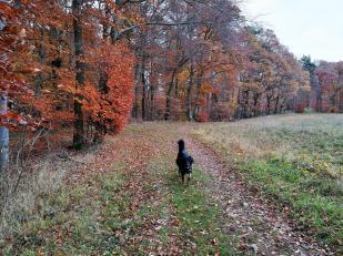 Am Waldrand entlang geht es zurück in Richtung Mechernich