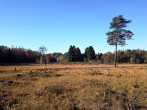 Offene Heidefläche