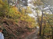 Auch der Wald trägt noch sein Herbstkleid