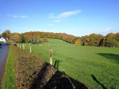 Wald und Wiesen am Auberg