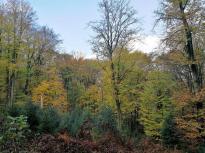 Wir laufen durch bunten Herbstwald