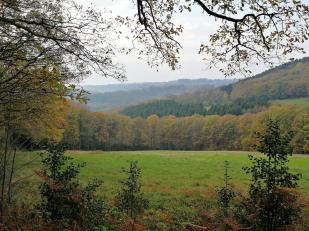 Ausblick am Pfaffenberg