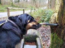 Doxi hat einen Brunnen im Wald entdeckt und schleckt fleißig