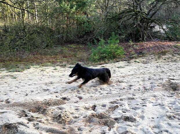 """Auf einer offenen Sandfläche bekommt Doxi ihre """"dollen fünf Minuten"""" und rast im Kreis umher"""