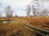 Holsztege führen - wie im angrenzenden Venn - durch die Heide