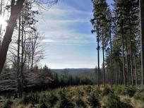 Blick vom Hahneberg über den Kloster Schweinheimer Wald