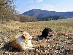 Jimy und Doxi auf den Höhen über dem Sahrbachtal