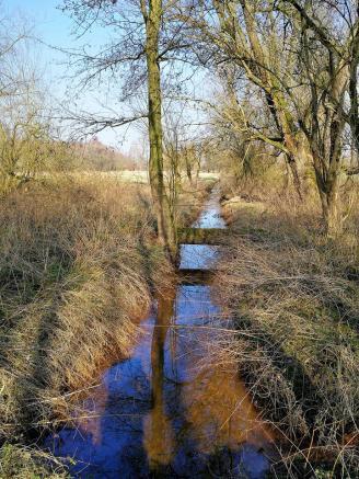 Mehrer Bäche entwässern das durch die Riheinnähe hochstehende Grundwasser