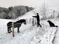 Mann fotografiert Pferd, Hund schaut zu