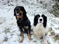 Doxi und Bentley