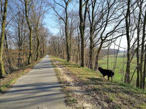 Schnurgerade führt die ehemalige Bahntrasse der Boxteler Bahn hier Richtung Xanten
