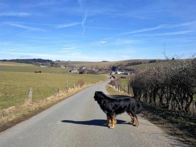 Doxi auf der Straße zwischen Burg-Reuland und Bracht