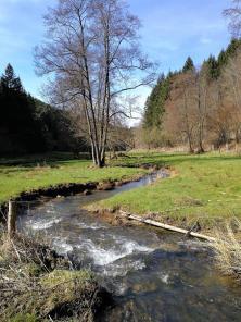 Die mäandernde Irmsch im Talgrund hinter Auel. Der Bach bildet hier die Grenze zwischen Belgien und Deutschland.