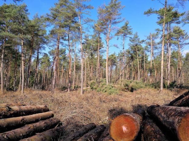 Im Wald liegen noch zahlreiche entwurzelte Bäume vom letzten Wintersturm