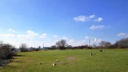 Auf den Rheinwiesen liegt noch viel Treibholz und angeschwemmter Müll vom letzten Rheinhochwasser