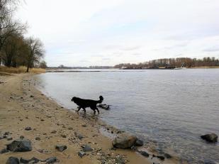 Am Rheinufer bei Zons