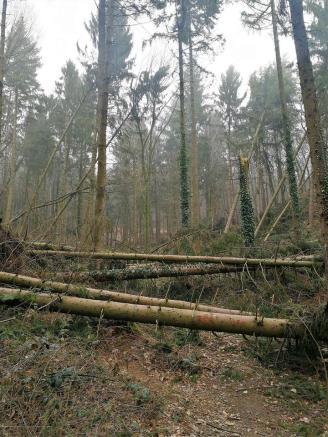 Umgestürzte Bäume vom letzten Wintersturm versperren uns den Weg